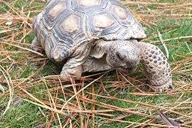 Tortoise on a stroll.