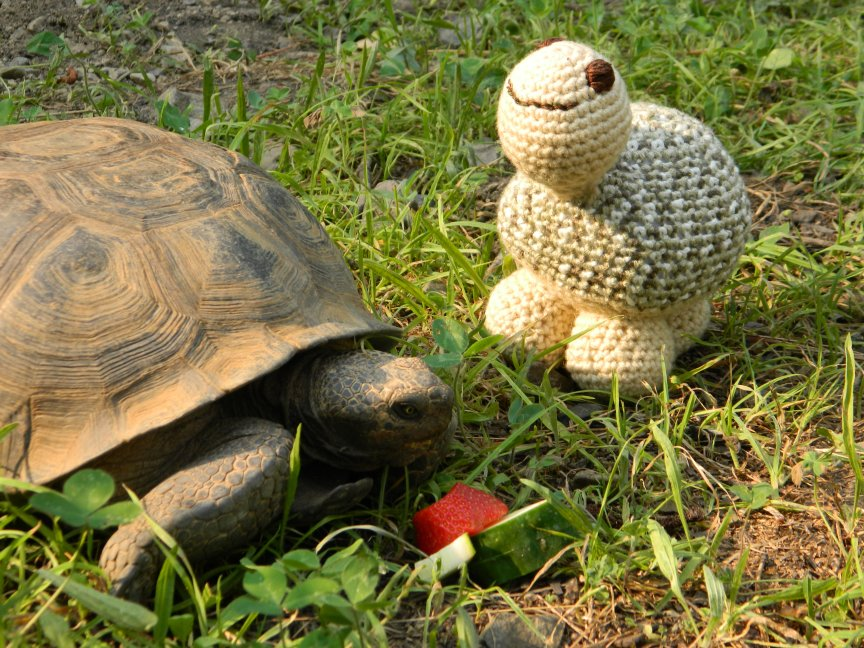Tortoise and toy.