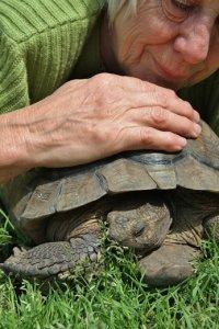 Woman caressing tortoise.