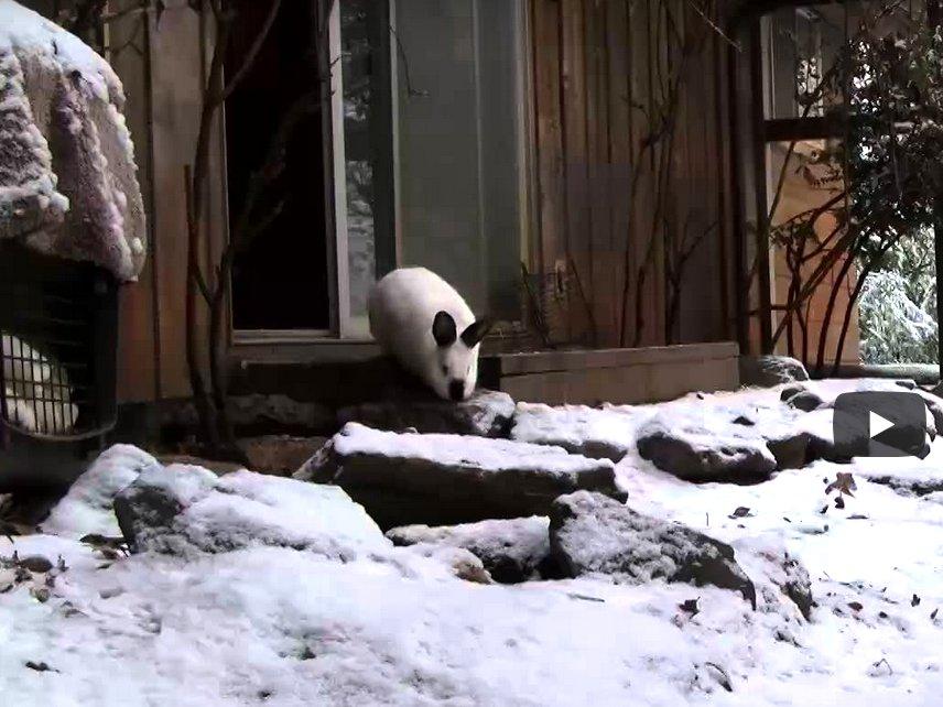Snow Brings a Lilt